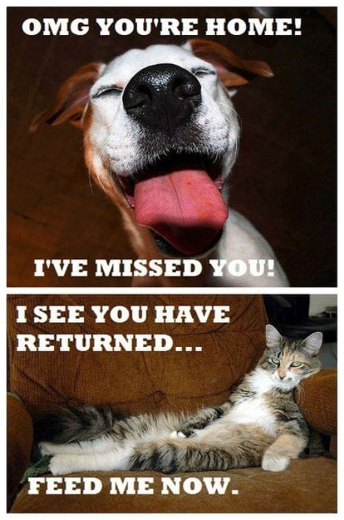 pets-reactions-when-you-return-home