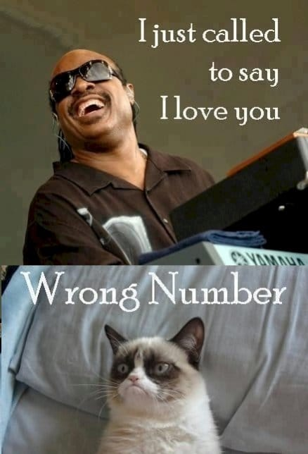 Stevie Wonder and grumpie cat – lol