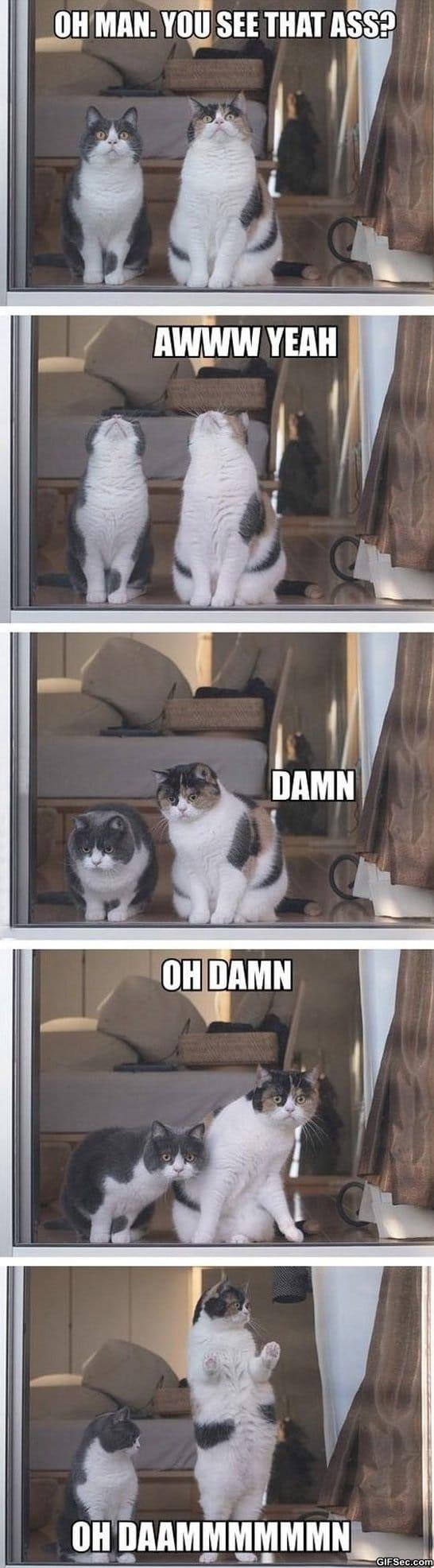 funny-pics-aw-yeah-meme
