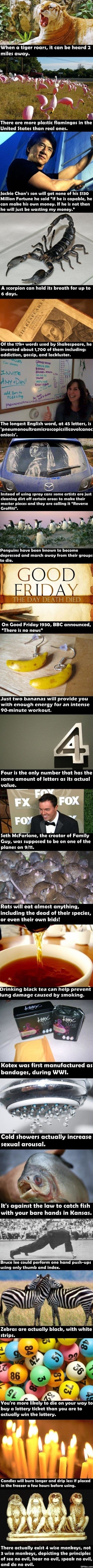 funny-pics-fun-facts-meme