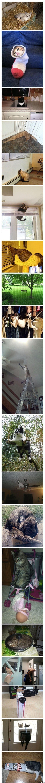 funny-pics-socialy-awkward-cat-meme