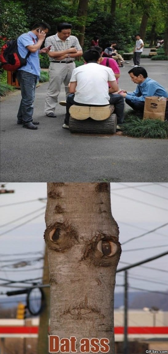 funny-pictures-how-baby-trees-are-born-meme