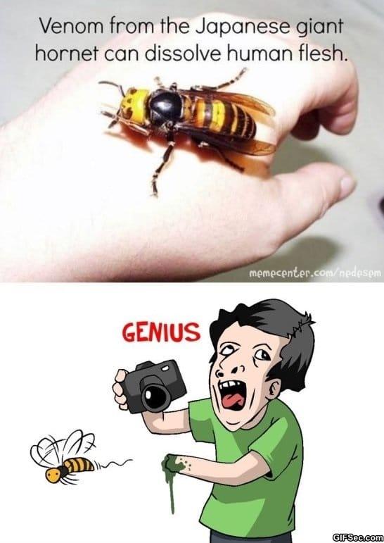 funny-pictures-japanese-giant-hornet-meme