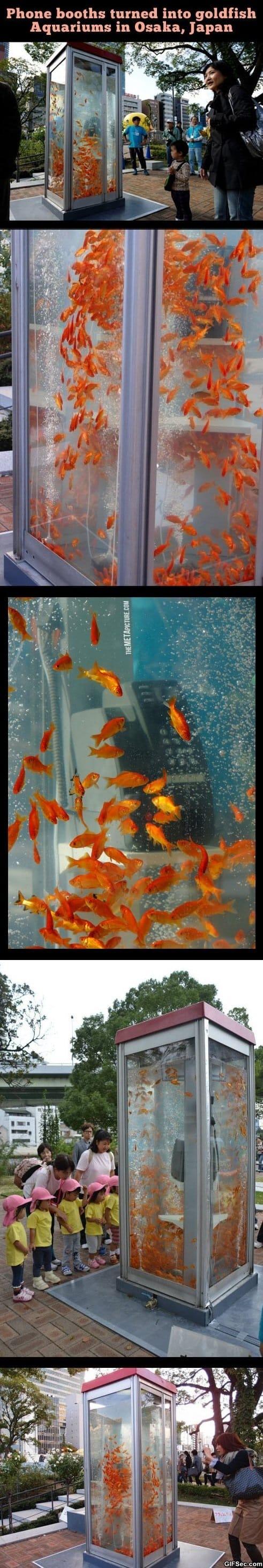 awesome-aquarium-phone-booths
