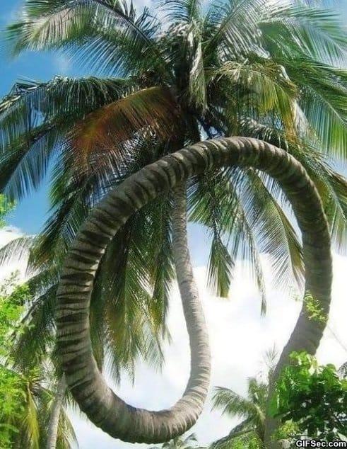 awesome-palm-tree