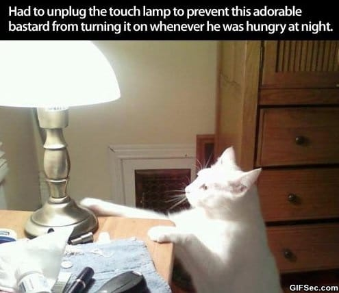awesome-cat