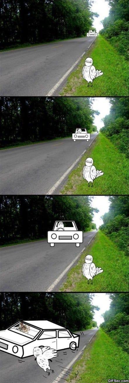 bird-logic