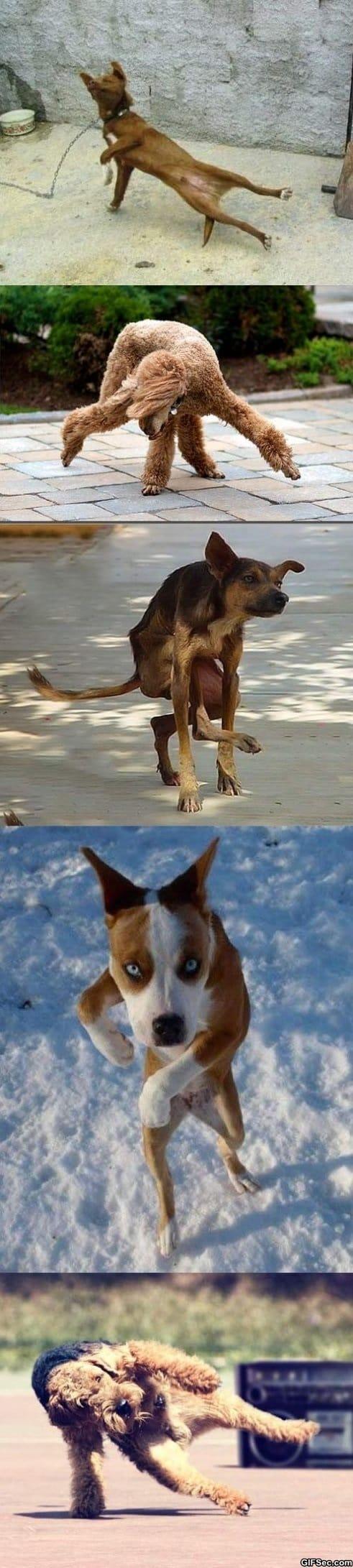 breakdancing-dogs
