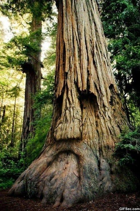 brilliant-tree-carving
