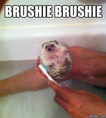 brushie-brushie