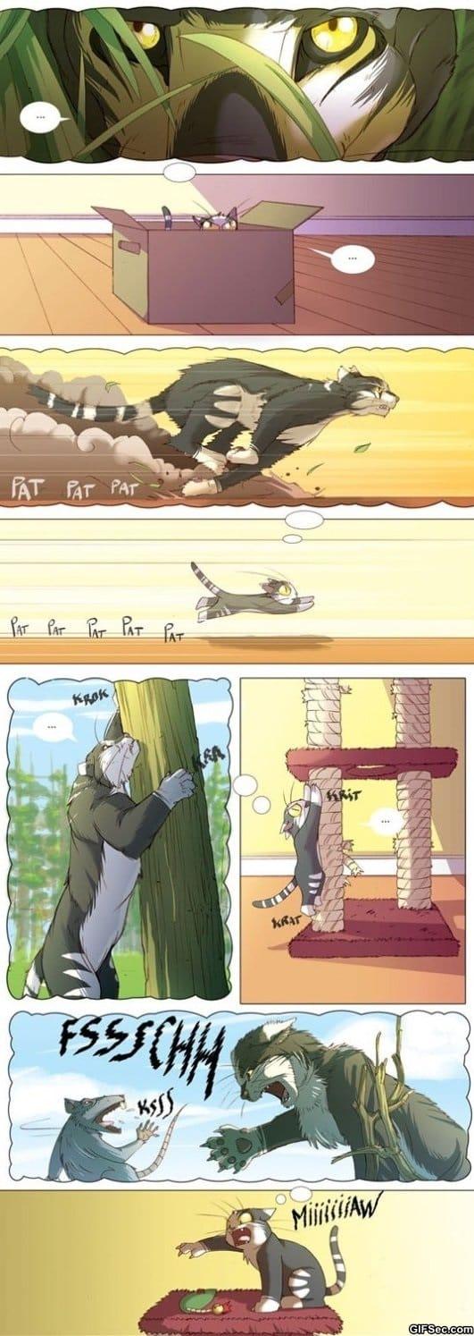 cats-meme