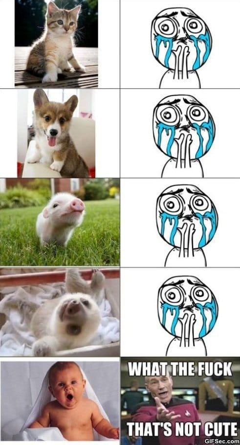 cute-meme
