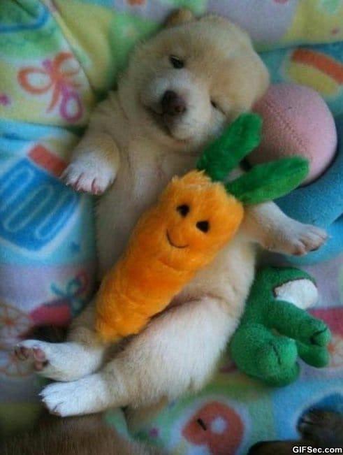 cute-photo