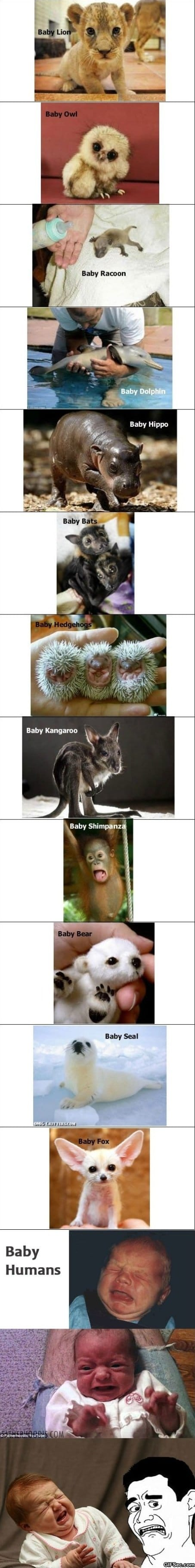 cute-baby-animals