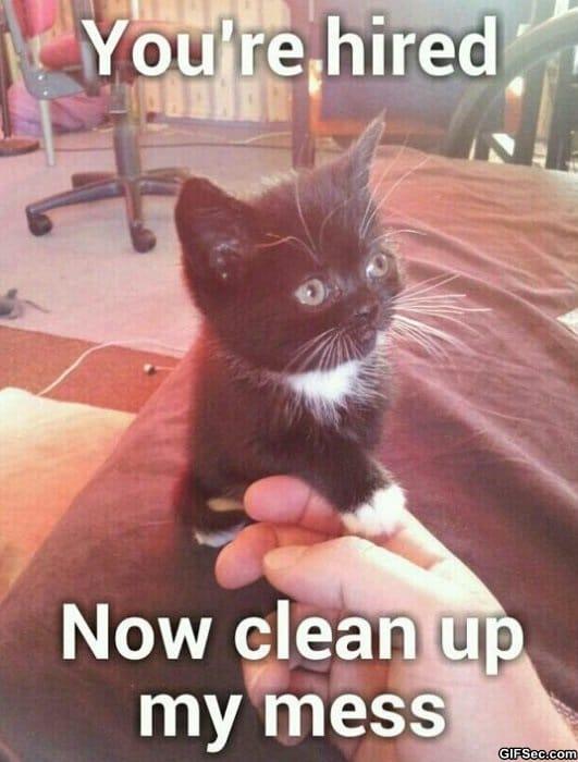 Funny Memes Clean Cats : Cute cat