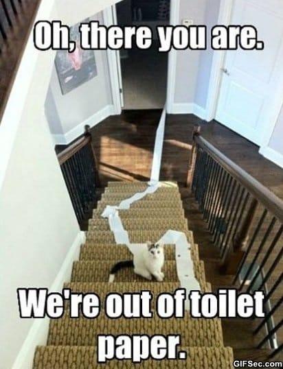 damn-cats