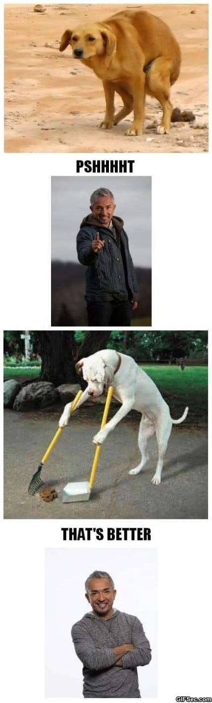 dog-whisperer-with-cesar-millan