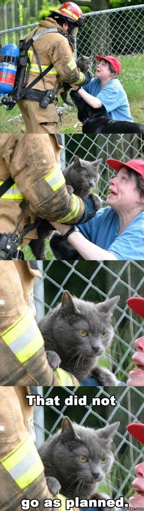 evil-cat-saved