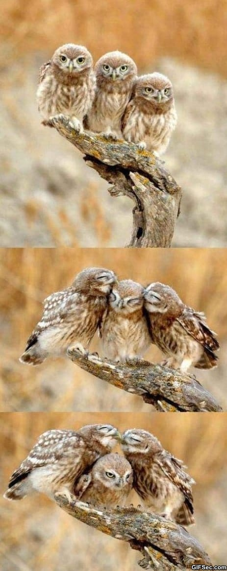 forever-alone-owl