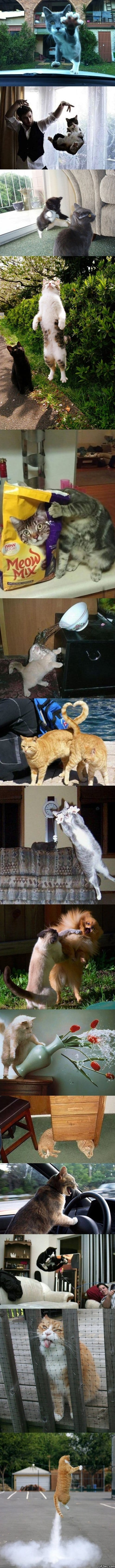 funny-15-perfectly-timed-cat-photos