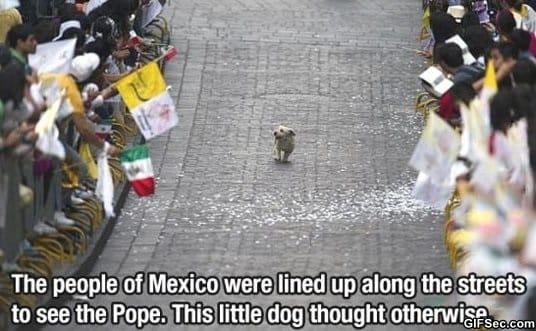 funny-awesome-dog