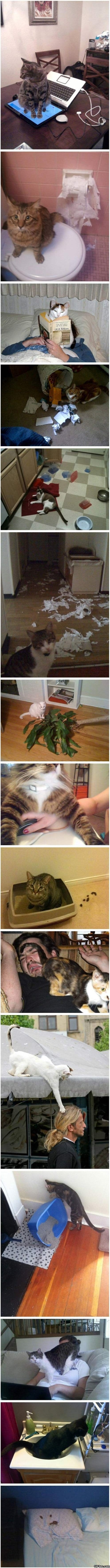 funny-cats-doing-evil-things