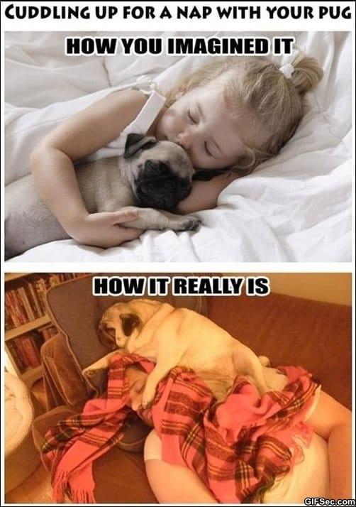 funny-cuddling