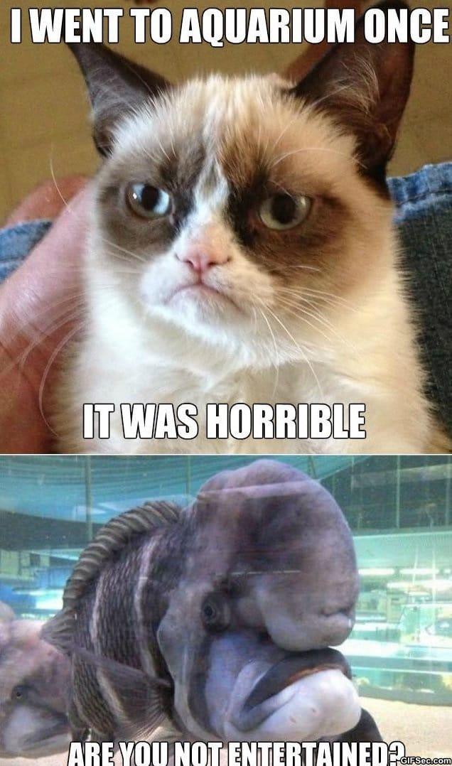 funny-grumpy-cat-meets-grumpy-fish