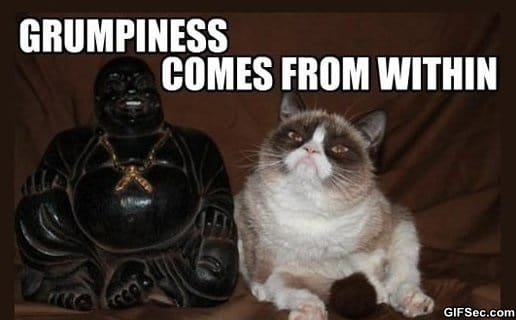 funny-grumpy-cat-meditation