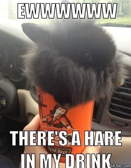 funny-hare-in-my-drink