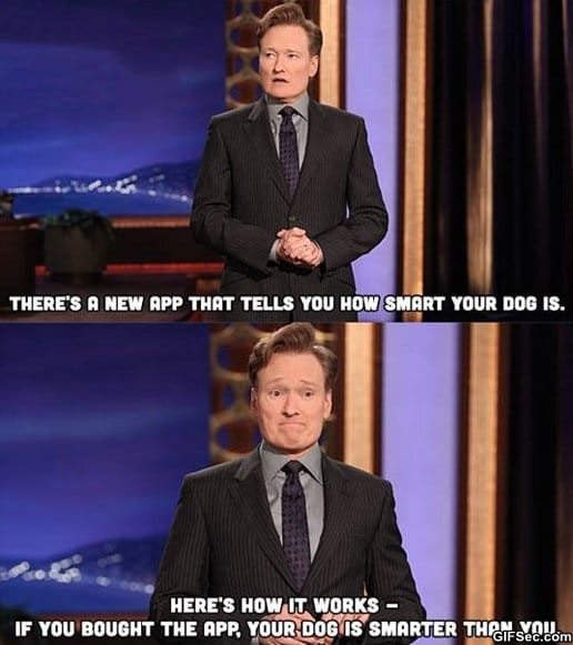 funny-how-smart-is-your-dog