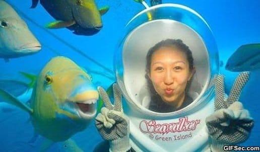 funny-photogenic-fish