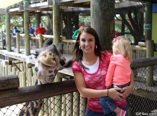 funny-photogenic-giraffe