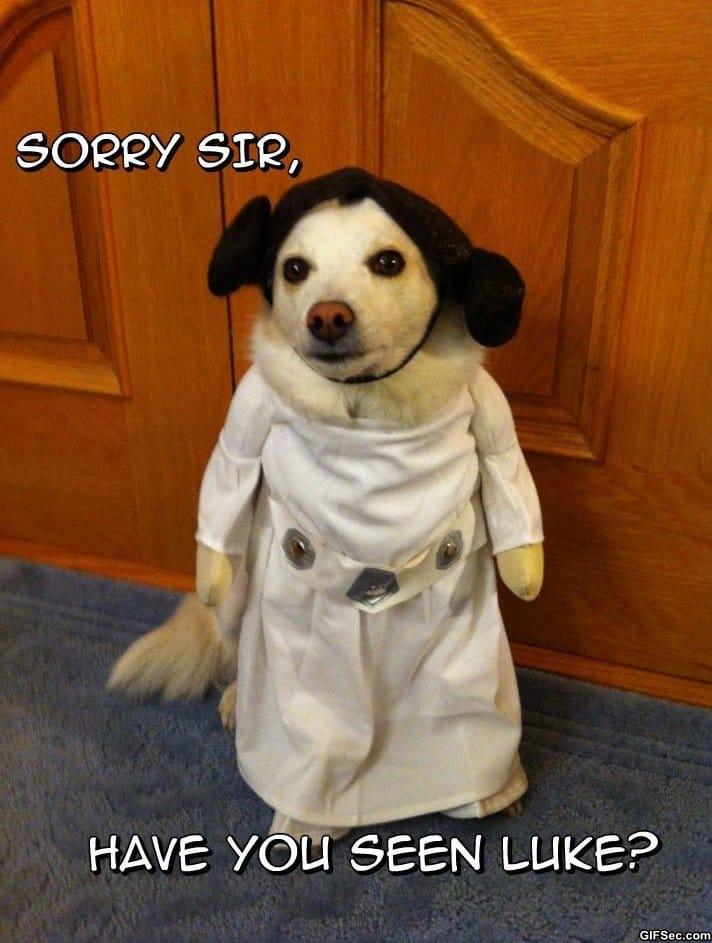 funny-princess-leia-cosplay
