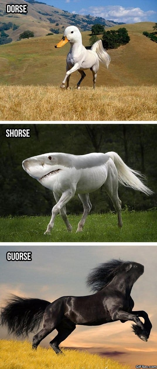 funny-silly-horses