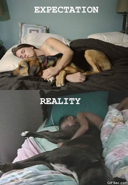 funny-sleeping-with-dogs