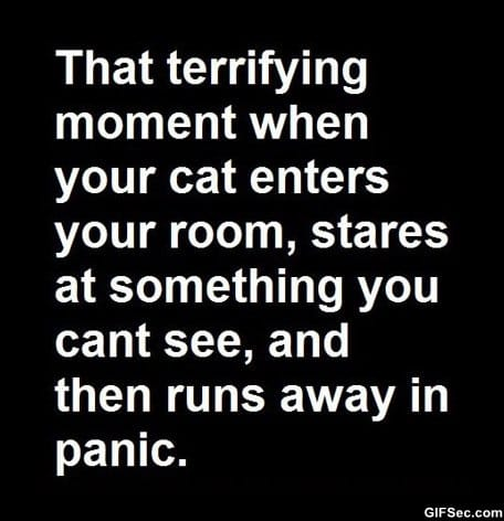 funny-that-terrifying-moment