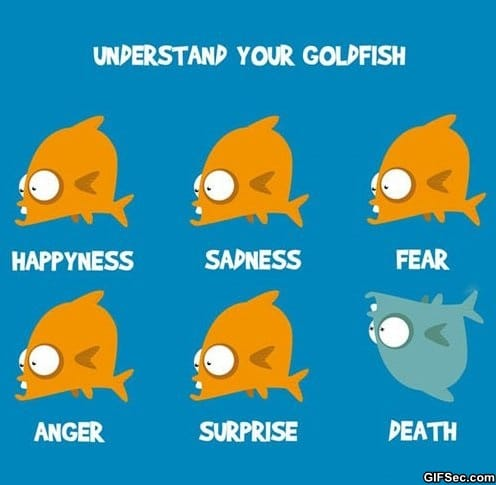 funny-understand-your-goldfish