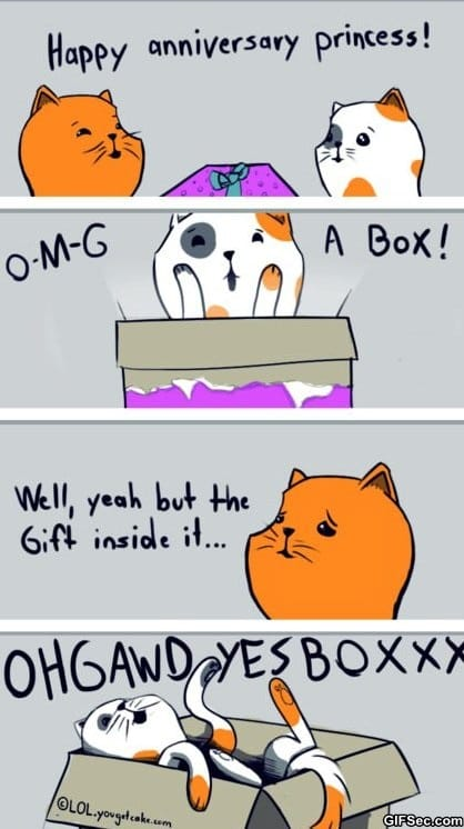 funny-when-cats-get-presents