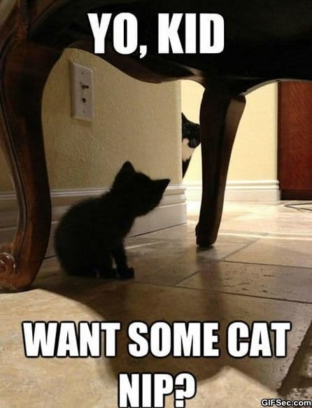 funny-lolcat-pictures