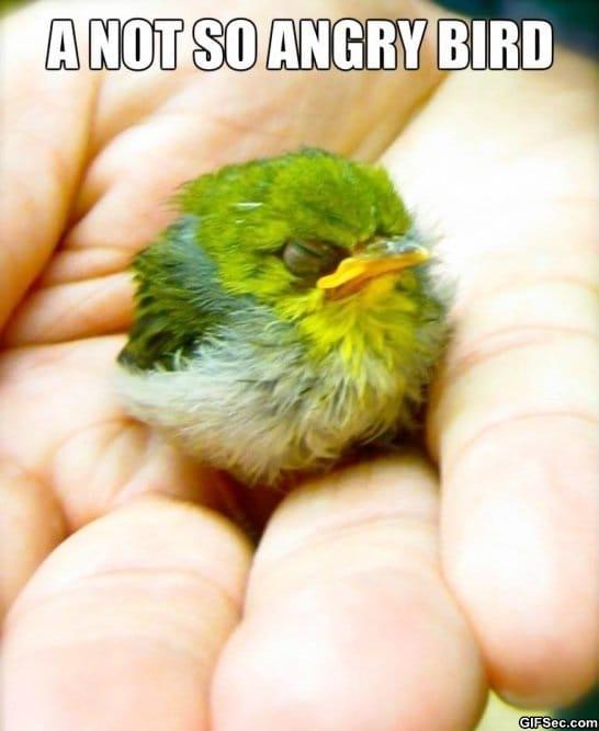 funny-pics-angry-bird