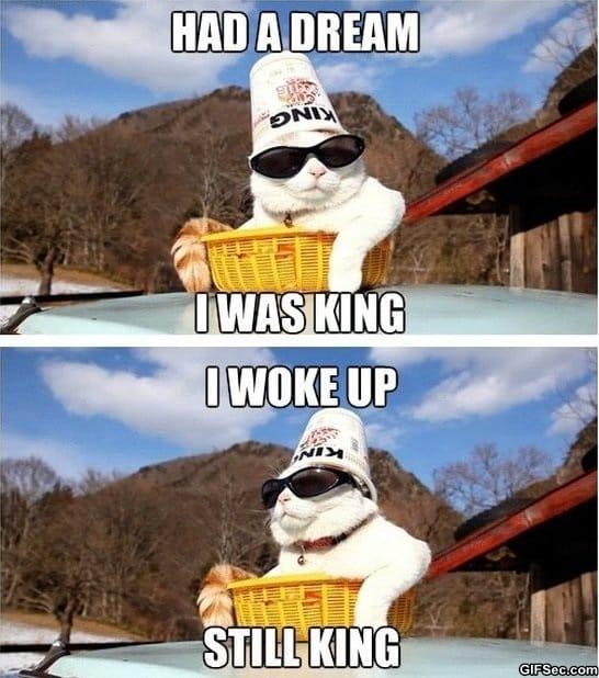 funny-pics-king