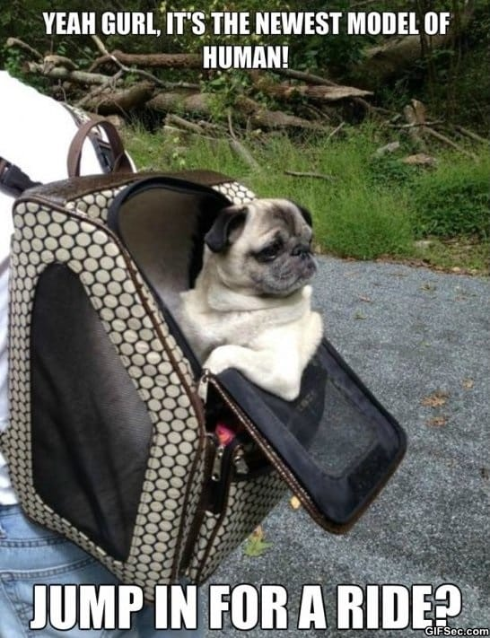 funny-picture-rich-pug