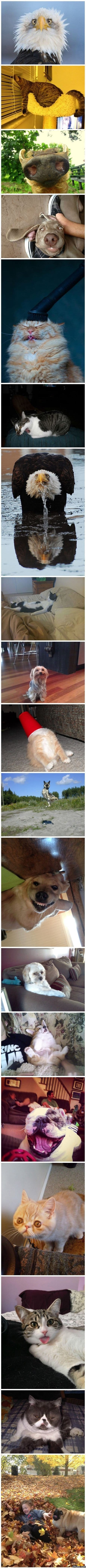 funny-pictures-animals-doing-silly-things