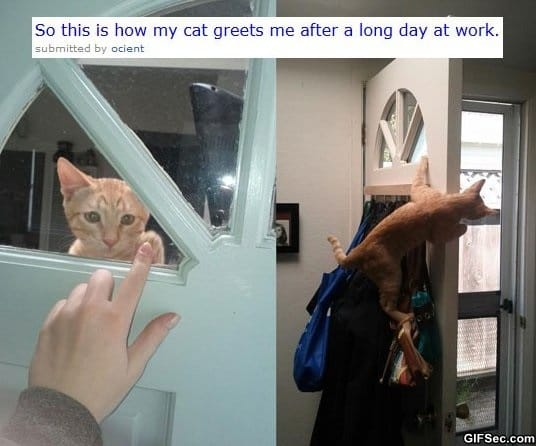 funny-pictures-awesome-cat