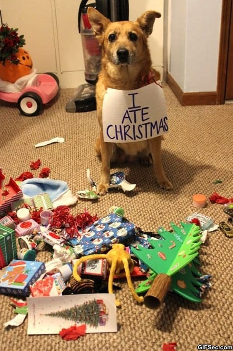 funny-pictures-christmas-shaming