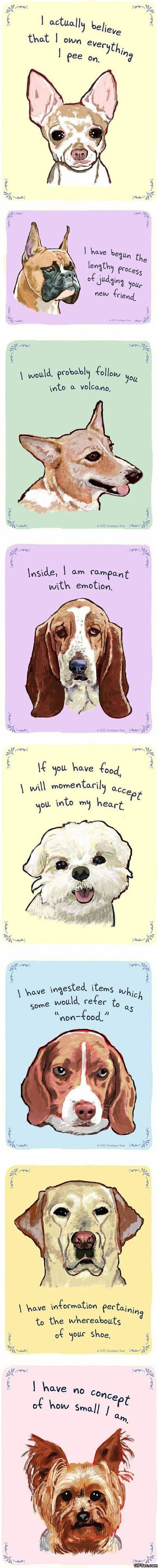 funny-pictures-dog-confessions