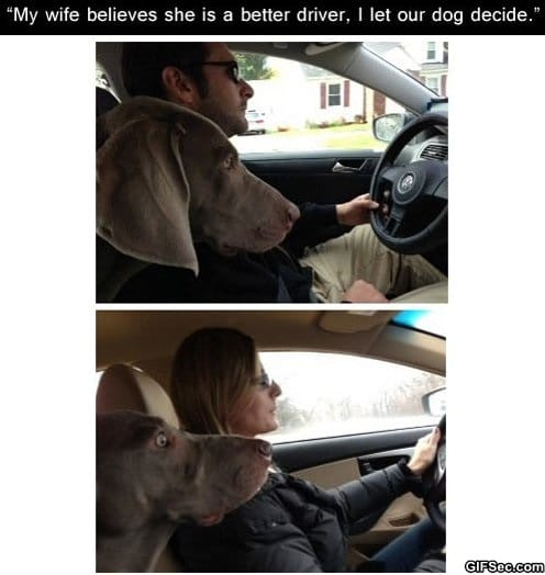 funny-pictures-driver