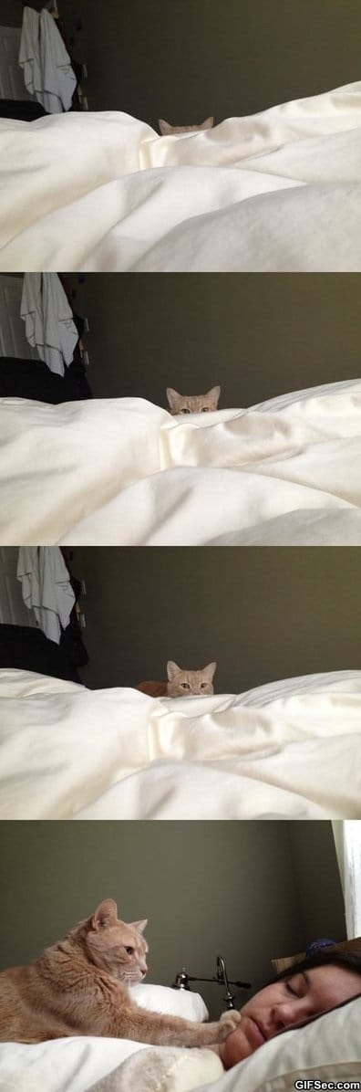 funny-pictures-how-cat-people-wake-up