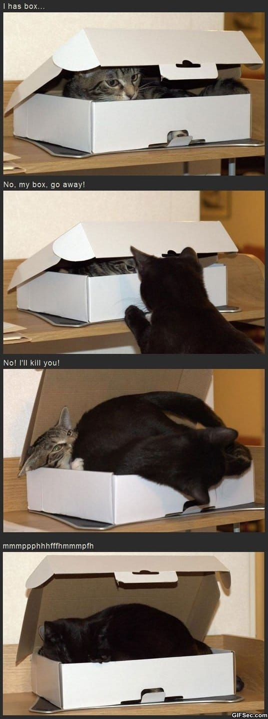 funny-pictures-i-has-box